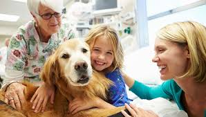 Comfort Dogs Certification Therapy Dog Training How To Get Your Dog Certified U2013 Top Dog Tips