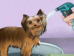 teacup yorkie haircuts pictures how to groom a yorkshire terrier with pictures wikihow