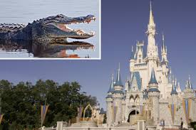 i was attacked by an alligator at disney world