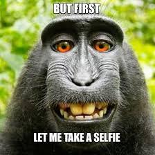 Monkey Meme - monkey selfie meme selfie thechainsmokers my original memes