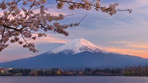 mount fuji cherry blossom wallpaper hd wallpapers