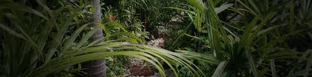plant lists thai garden design the thai landscaping experts