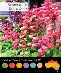 All Year Flowering Shrubs - mirabilis u0027limelight u0027 summer photos and on summer