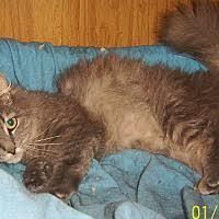 affenpinscher ottawa chapman mills ottawa on pet adoption cat a match rescue has