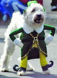 Leprechaun Halloween Costume Ideas Bahahahahaa Fotografia Animais Dog Animal
