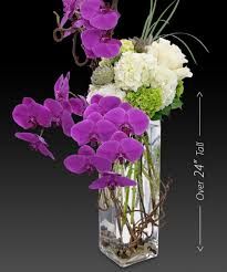 purple orchids artisan orchids and succulents tropical luxury beneva