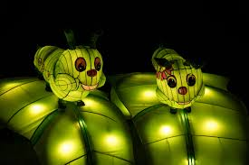 free images light flower green insect darkness yellow