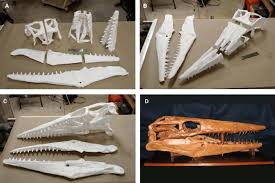 progression of assembly for a mosasaur skull and jaws tylosaurus