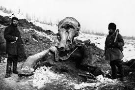 quest u0027de extinct u0027 mammoths york