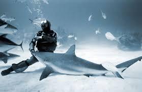 Rhode Island snorkeling images Jeremiah sullivan rhode island mako shark diving experience ifonly jpg