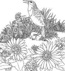 bird and sunflower garden coloring page download u0026 print online