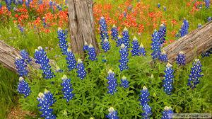 download lovely flowers full hd wallpapers u2022 elsoar