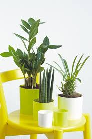 modern pots for indoor plants best ideas about large outdoor
