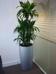 Low Light House Plant Houseplants For Low Light Levels 28 Images Low Light Level