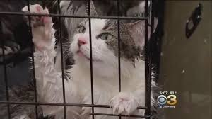 animals from texas sent to new jersey shelter following hurricane