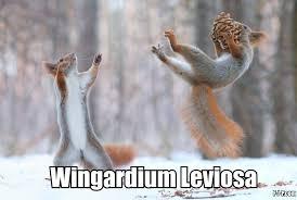 Squirrel Meme - squirrel memes home facebook