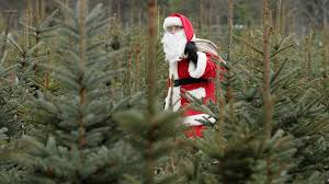buy christmas tree christmas trees in houston where to cut your own or buy fresh