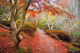 Mt Lofty Botanic Gardens Autumn At Mount Lofty Botanic Garden By Kelvin Wong Redbubble