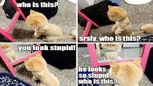Cheezburger Meme Builder - i can has cheezburger cute page 2 funny internet cats cat