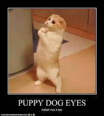 Puppy Eyes Meme - dog wallpaper cute please animal meme wallpapers