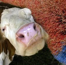 Die K He Tierethik Wer Tierrechte Will Bahnt Der Euthanasie Den Weg Welt