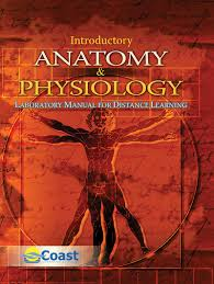 distance learning anatomy image collections learn human anatomy