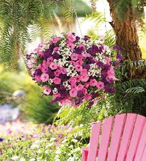 Flower Pros - hanging baskets 5 secrets the pros use the garden glove