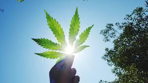 smoking weed in backyard california legalizes marijuana everything you need to know time