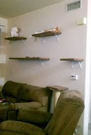 Wall Shelves For Cats 26 Best Cat Shelves For The Home Images On Pinterest Cat Stuff