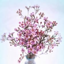 Discount Flowers Bulk Discount Flowers Pink Wax Flower