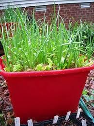 78 best container gardening images on pinterest vegetable garden