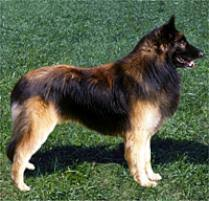 belgian sheepdog rescue ohio dog breeds browse 151 dog breeds petfinder