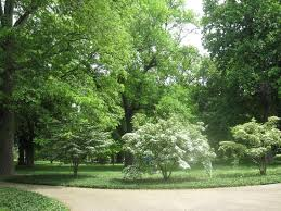gorgeous trees in picture of central park louisville