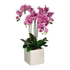 orchid plants 3 purple orchid plants arranged in a ceramic container seasons