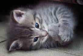 beautiful kittens beautiful kittens funkidos com