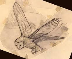 barn owl sketches and drawings bird drawings