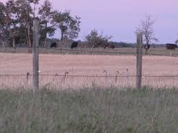 sandhill cranes u2013 prairie birder