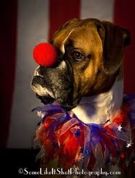 Halloween Costumes Boxer Dogs Clown Costumes Dogs Shiny Clown Costume Dogs Circus