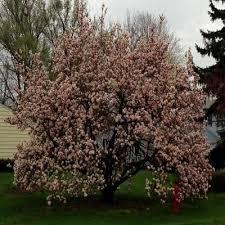 home depot black friday spring circular 17 best soil compost plant food fertilizer images on pinterest