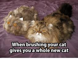 New Grumpy Cat Meme - when brushing your cat gives you a whole new cat cats meme on sizzle
