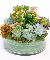 succulents and driftwood succulent plants flower shop san diego