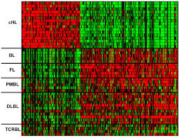 Nhl Map Analyzing Primary Hodgkin And Reed Sternberg Cells To Capture The