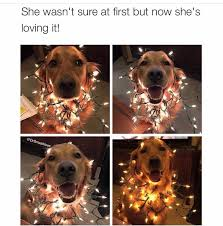 Christmas Dog Meme - 15 hilarious doggo memes guaranteed to make your day
