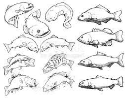 fish pencil sketch set stock vector art 165689132 istock