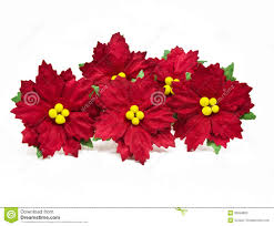 christmas flowers christmas flower paper white isolated paper made flowers royalty