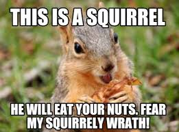 Squirrel Nuts Meme - meme creator this is a squirrel he will eat your nuts fear my
