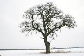 tree in winter by doug stener solace in a book