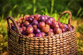 dried plum health benefits and facts california dried plums