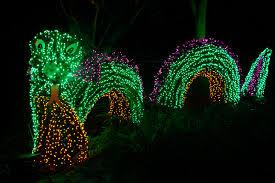 Bellevue Botanical Garden Lights Monkey Puzzle Blog December 2011