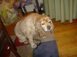 Dog Peed On Bed Best 25 Dog Urine Ideas On Pinterest Dog Urine Remover Pet